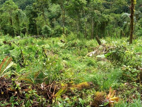 Terreno Agrícola La Merced  selva central 270 Hectareas