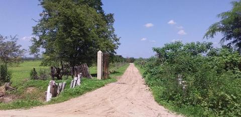 Vendo Terreno Agrícola Sector Curvan Tambogrande 17 Has
