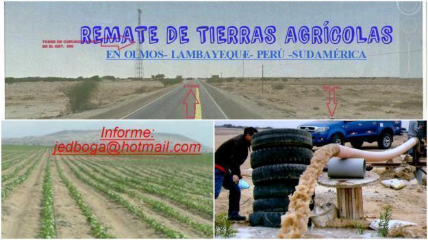 REMATE DE TIERRAS AGRÍCOLAS: OLMOS