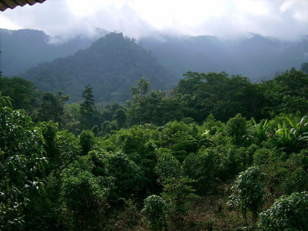 Terreno 40 has alquilo en Selva Ucayali a conversar!!!!