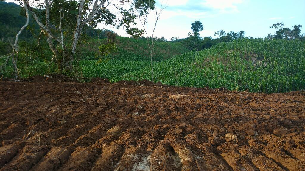 Terreno Agrícola La Merced Chanchamayo