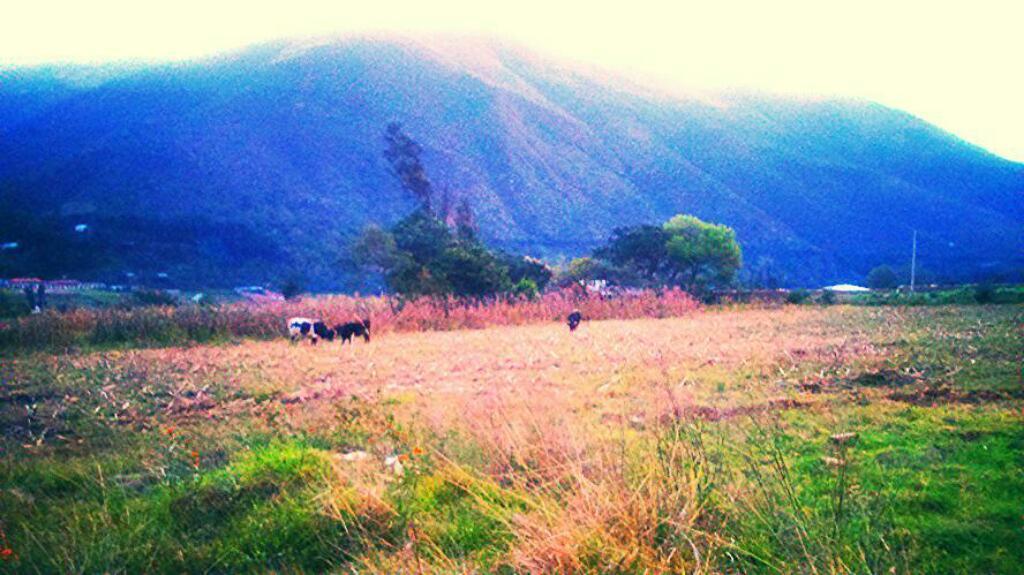Terreno en Huánuco de 800m2 entrada unguymaran las pampas vichaycoto